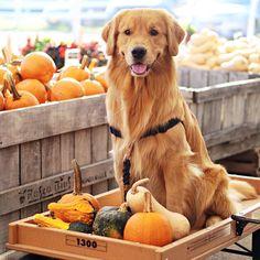 Ok, I'm ready to check out! #pumpkinpatch