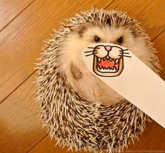 Be Ready Giggle With The Cuteness Of This Hedgehog's Different Faces
