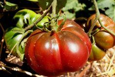 Γεμίζω το καλάθι μου με τη σοδειά του Ιουλίου | Θέματα | Bostanistas.gr : Ιστορίες για να τρεφόμαστε διαφορετικά