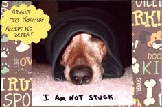 The Pet Postcard Project helps feed homeless dogs and cats, one postcard at a time! Run by Nikki Moustaki, dog trainer, author, and pet expert. Homeless Dogs, Weiner Dogs, Dachshunds, Pinterest Board, Fun Stuff, Dog Cat, Appetizers, Pets, Funny