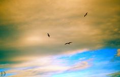 Animal - Birds trio and ocher sky. Trio d'oiseaux et ciel ocre. Collioure, France. ©Dorian Garnier