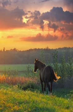 Horse and pretty sunset