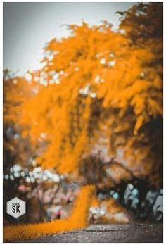 Background Wallpaper For Photoshop, Blur Background In Photoshop, Portrait Background, Blur Background Photography, Photo Background Editor, Photo Background Images Hd, Best Photo Background, Studio Background Images, Picsart Background
