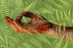 ferny mudra por Muffet