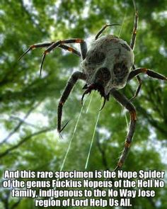 New species of spider found in the Australian Outback funny...