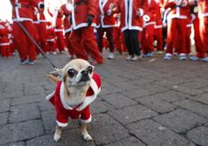 A dog with a Santa hat waits with its owner to start the annual charity Santa run in Loughborough, England, on December 4, 2016.