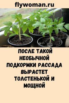 Vegetable Garden Design, Diy Home Crafts, Soda, Vegetables, Plants, Beverage, Soft Drink, Sodas