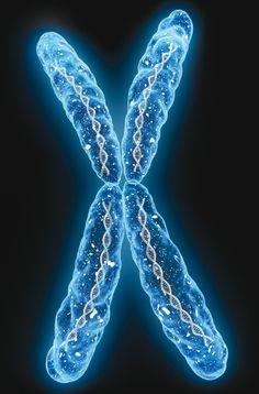 Cromosoma - Photography, Landscape photography, Photography tips Biology Art, Biology Lessons, Science Biology, Medical Science, Science Art, Dna Art, Medical Wallpaper, Microscopic Photography, Medicine Student
