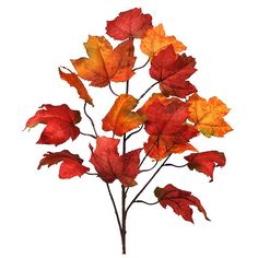 ZiaBella 32'' Burgundy Maple Leaf Spray Décor ($7.99) ❤ liked on Polyvore featuring home, home decor, holiday decorations, outdoor holiday decorations, outdoor holiday decor, outdoor home decor, inspirational home decor and outside home decor