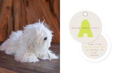 Alicia Adams Alpaca Coco