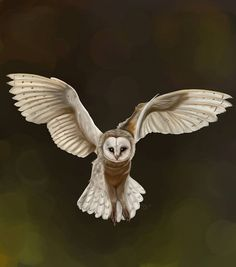 Owl Art Print Stunning Barn Owl Wildlife Animal by MyWhimsicalRose