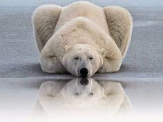 Mundo Encantado: Um urso polar no meu ateliê / A polar bear in my a...