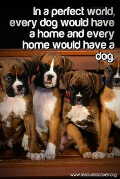 … every dog would have a home and people would stop breeding them until this were to happen.