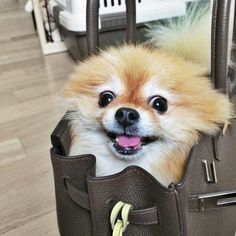 I used to smuggle my dog Max in a purse all the time.  He was such a good boy.