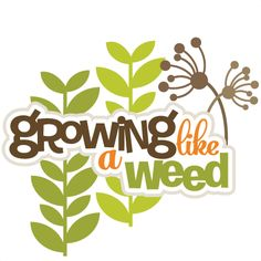 Growing Like A Weed SVG scrapbook title svg crapbook titles svg cut files svg files free svg files. grands?