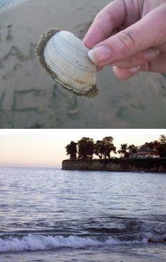 clam-shell,santa-cruz