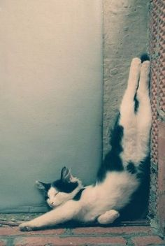 25 Awkward Cat Sleeping Positions: the half handstand Baby Animals, Funny Animals, Cute Animals, Wild Animals, Funny Cat Videos, Funny Cats, Cool Cats, I Love Cats, Photo Chat