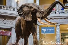 Eco-Babyz: Best Places to See With Kids in Washington D.C.