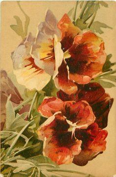 Orange & red pansies, by Catherine Klein ~ 1906.