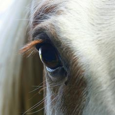 eye to eye for-the-love-of-horses