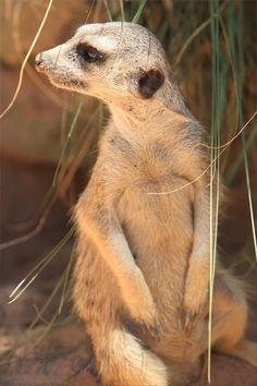 Animals at Taronga Zoo - Sydney, New South Wales, Australia
