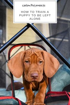 Carlson Pet Products shares tips and tricks for teaching your new puppy to be left alone and transitioning them to not being with you Photo by IG: Types Of Dogs Breeds, Dog Breeds, Left Alone, New Puppy, Pet Products, Dog Life, Dog Training, Doggies, Revolution