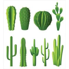 Buy Cactus Realistic Set by macrovector on GraphicRiver. Different types of cactus plants realistic decorative icons set isolated vector illustration. Editable EPS and Render. Tulips Flowers, Flower Vases, Planting Flowers, Types Of Cactus Plants, Free Plants, Cactus Planta, Babys Breath Flowers, Blue Sky Background, Stock Foto