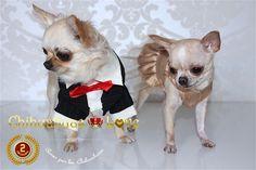 Chihuahuas Love - Chihuahuas-Love 2º Aniversario. Hoy Cumplimos 2 Años. 9 NOVIEMBRE
