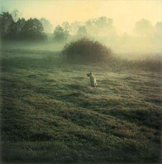 Cão Dak, Miásnoie, Setembro, 1980 -  Andrei Tarkovsky.