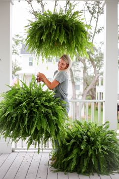 Hanging Ferns, Hanging Plants Outdoor, Hanging Baskets, Large Outdoor Planters, Porch Plants, Garden Plants, Boxwood Garden, Container Plants, Container Gardening