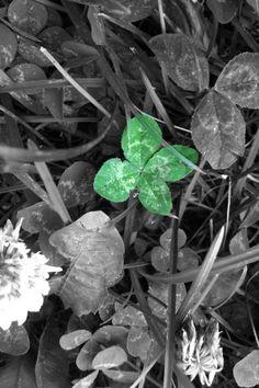4 Leaf Clover.