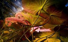 Imagem captada por câmera subaquática permite recriar a visão de um peixe em lago na Flórida