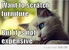 cannot get enough of these first world cat problems