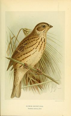 Coloured figures of the birds of the British Islands / issued by Lord Lilford.