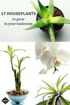 bathroom plants Learn seventeen houseplants to grow in the bathroom. Try these plants that tolerate wide temperature and humidity level fluctuations. Hanging Plants, Indoor Plants, Organic Gardening, Gardening Tips, Indoor Gardening, Diy Plante, Inspiration Design, Cool Plants, Inside Plants