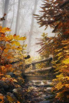 nature à l'automne