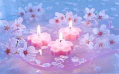 Cherry blossom and candles Pink Candles, Floating Candles, Pillar Candles, Candels, Cactus Candles, Floating Plants, Feng Shui, Bougie Rose, Tarot Gratis