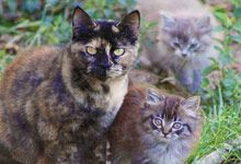 Kittens and Mom Scenarios and How to Trap - Alley Cat Allies