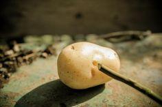 4. Toma una patata y hazle un agujero lo suficientemente grande como para que quepa el esqueje. Puedes usar una rama en punta o destornillador para hacer esto.