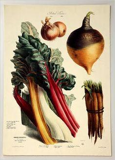 Légumes presques vivants