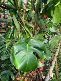 Known countrywide as a mecca for houseplant and tropical plant lovers, Loggee's Greenhouses is the ideal location to visit if you need to chase away the winter blues.