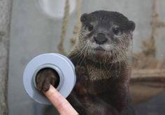 カワウソのふにゃっとした手を触れる水族館 - まとめのインテリア