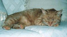 My cat Buster. Jette, McKinleyville, CA. 2/27/14.