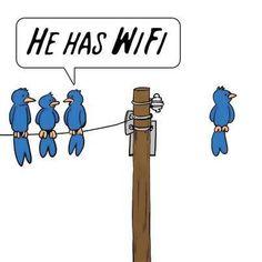He Has Wifi Birds