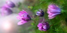 FIELD FLOWERS - Enjoy it!