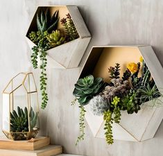 Fun Home Decor for Millennials: Succulent wall art in geometric planters | NONAGON.style
