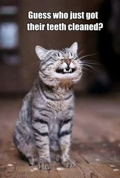 Teeth! #funnycatmemes #funnycats