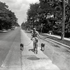 Shorpy Historical Photo Archive :: A Boy and His Dogs: 1928