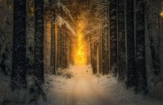 Best of — Beyond the Snowy Forest by Lauri Lohi Mountain Wallpaper, Forest Wallpaper, Hd Wallpaper, Wallpapers, Snow Forest, Snow Covered Trees, Black Tree, Winter Scenery, Tree Illustration