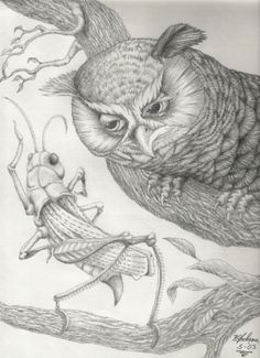 Aesop's fables Grasshopper and the Owl , artwork by Kelly Jackson